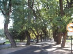 ... plaza in mendoza... or is that the park..??